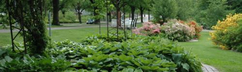 Kuvassa on Fuksinpuiston kasveja
