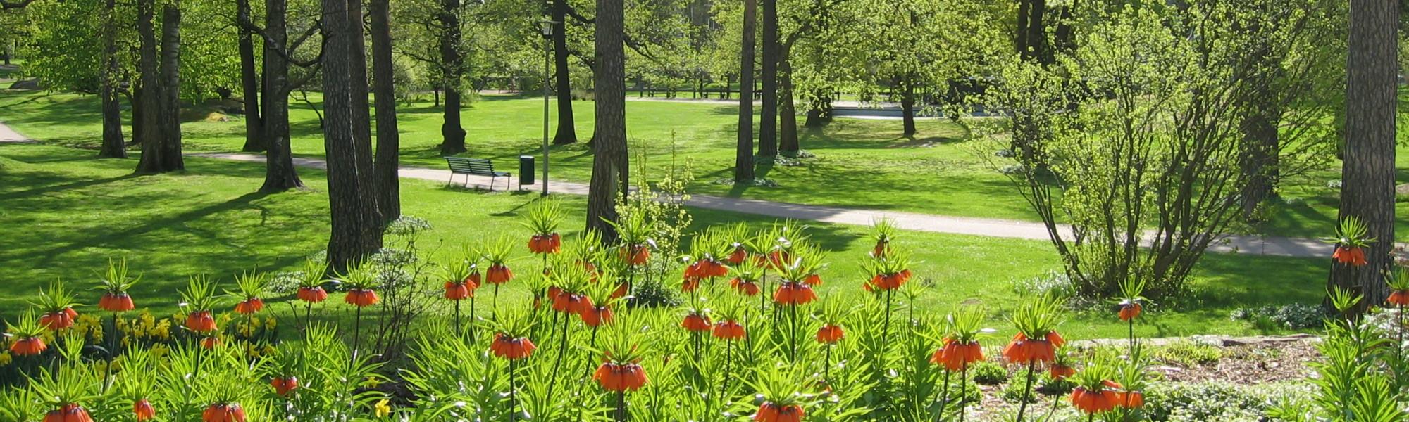 Kuvassa on Isopuiston kasvillisuutta