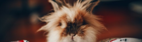 Kuva kanista ihmisen sylissä