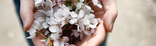Kuvassa kädet ojentavat valkoisia kukkia.