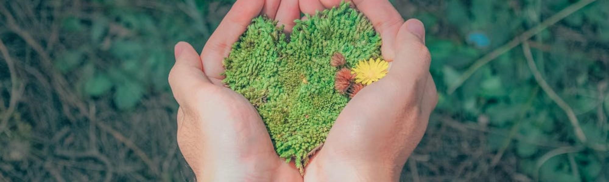 Kuvassa kädet ojentavat vihreää ruohoa olevan sydämen.
