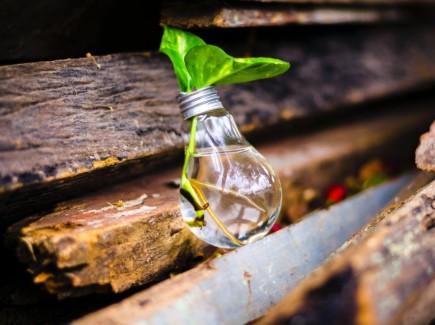 Kuvassa on pieniä vihreitä lehtiä maljakossa.
